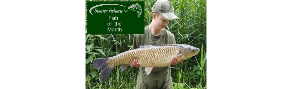 Fish of the Month - June