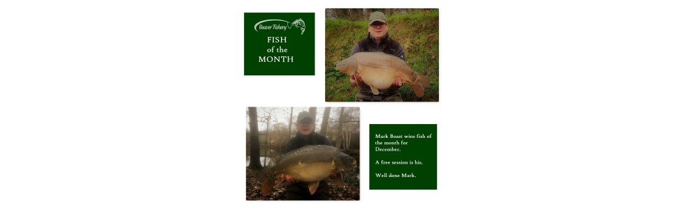 Fish of the Month - December