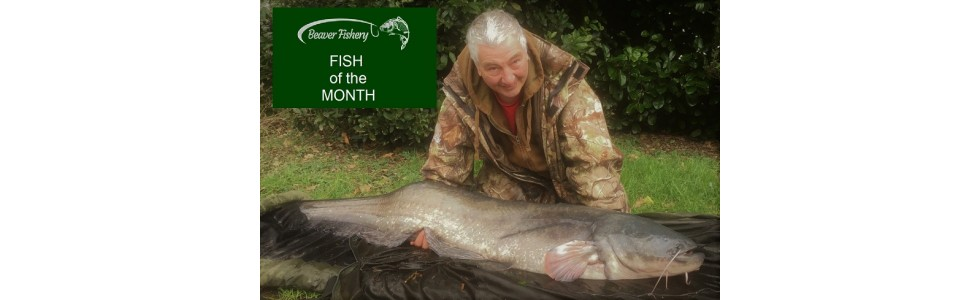 Fish of the Month - February